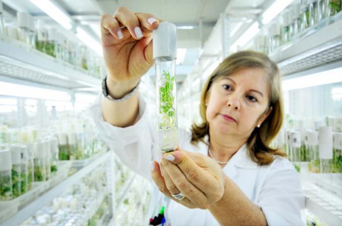 Запрет ГМО-продукции в России